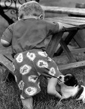 llegada de un bebe convivencia perros