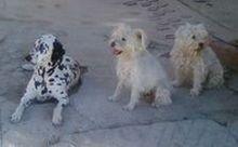fotografia perros