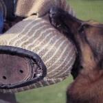 trabajos defensa perros