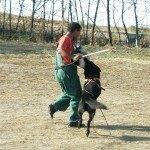 transporte_del_perro