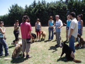 Perros-en-grupo-estado-de-calma