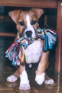 cachorro-jugando