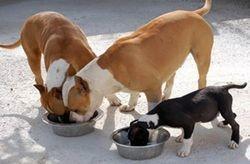 perros-habituación-para-comer