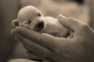 miedo-a-los-perros-cinofobia (1)