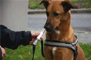 perros dectectores de enfermedades6