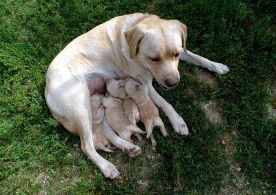 Instinto-maternal (2)